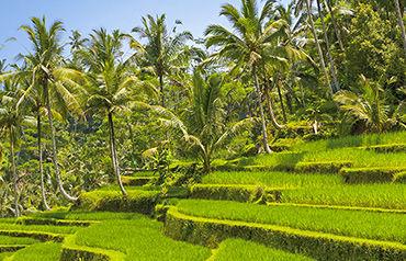 Circuit Merveilles de Bali 4* - 7 nuits