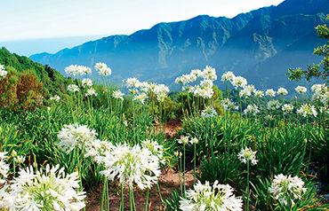 Autotour la route des fleurs depuis l'hôtel club héliades pestana ocean bay suites 4*