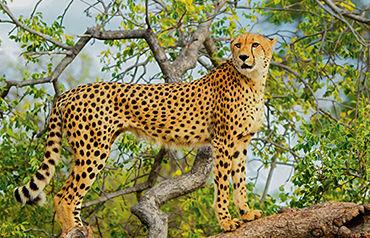 Autotour Johannesburg et Parc Kruger 2/3*
