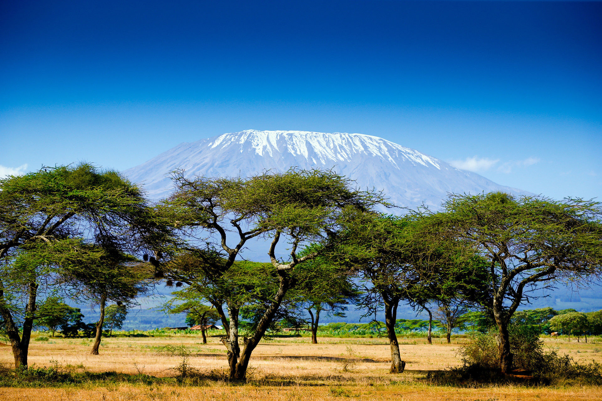 Circuit du Mont Kilimandjaro à l'Océan Indien