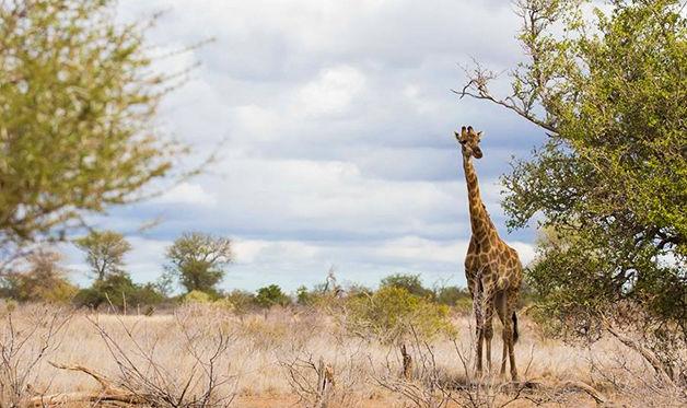 Circuit du Masai Mara aux plages de Mombasa 3/4*