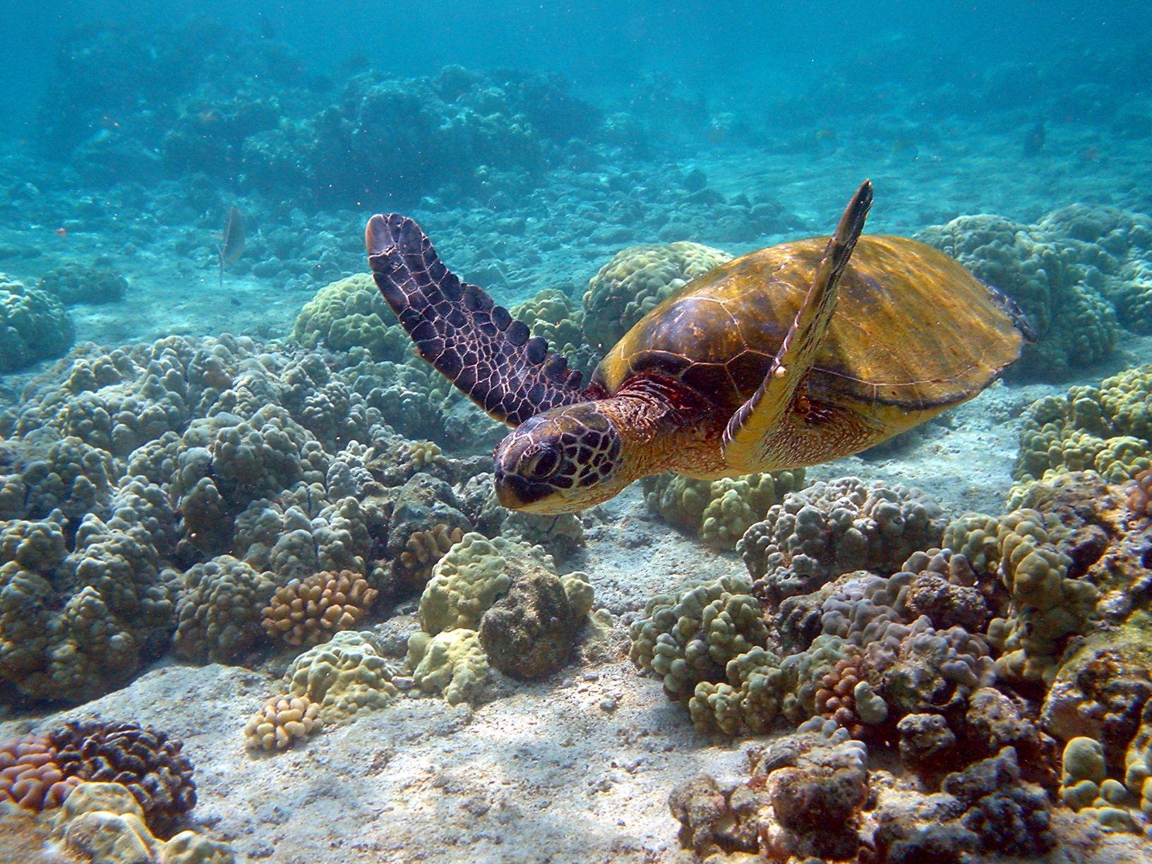 Autotour magique yucatan en 5 jours plus extension 2 nuits balnéaire