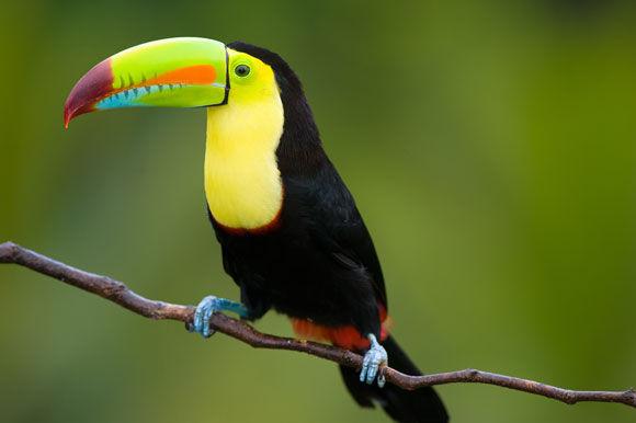 Circuito Ensueños de Costa Rica